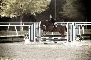 Ocala, Florida:  Horse Show
