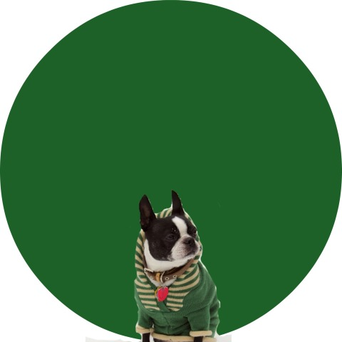 st patricks day boston terrier