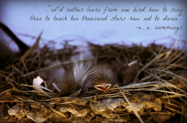 baby bird e e cummings quote
