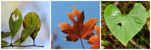 3 x 3 heart leaves