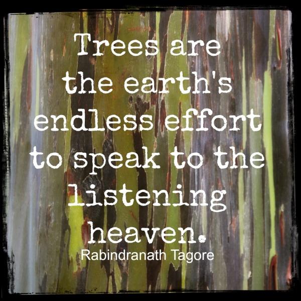 ordinary creative tree quote
