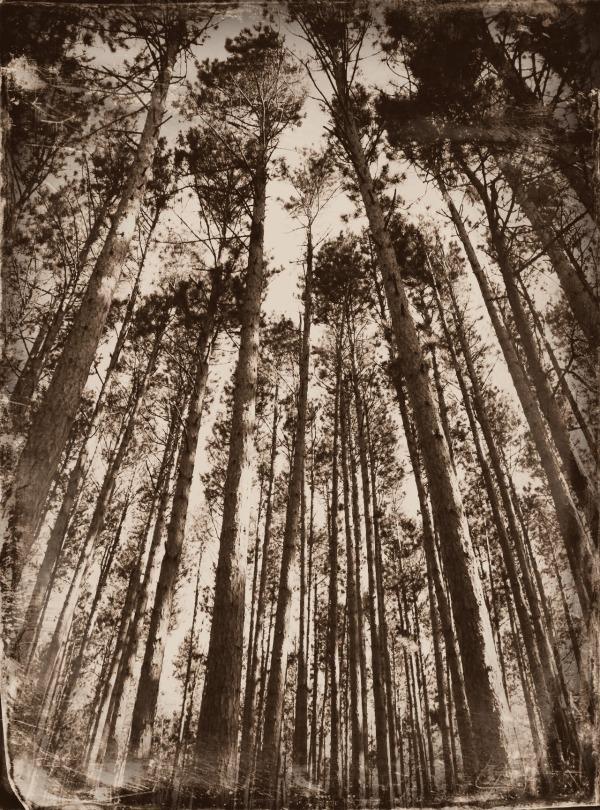 ordinary creative tree