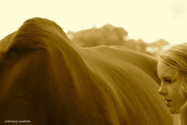 ordinary creative averi horse